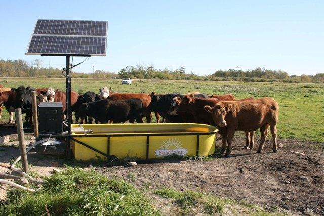 Livestock Amp Plant Water Supply